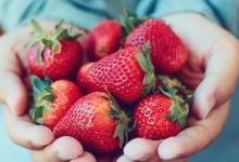 Ягодите забавят остаряването на мозъка