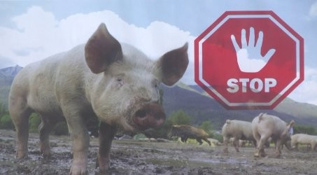 """Протест срещу избиването на """"прасетата в задния двор"""" ще блокира днес пътя Варна-Бургас"""