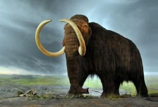 """Учени разработват технология за """"съживяване"""" на изчезнали видове"""