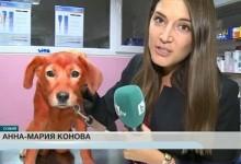 Националните медии: Важни са кученцата, а не хората