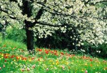 Времето днес: Очаква ни слънчев Великден
