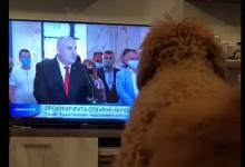 "Иван Гешев и ""Да разлаеш кучетата"". Буквално /видео/"