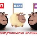 sheeps-0131