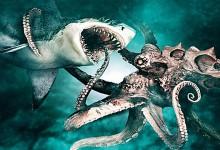 Идва гладна акула, която е хвърлила око на политическия октопод