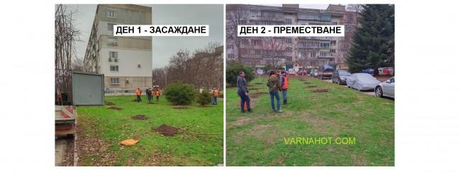 Озеленяването във Варна: Единият ден засаждат дръвчета, а на другия ги …. преместват?!?