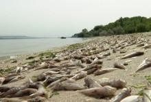 Няма проблем според Портних! Рибата във варненското езеро избирала не от аварията, а от нещо друго?!?
