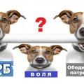 8454235bcd44ef64db92e73854a79e71