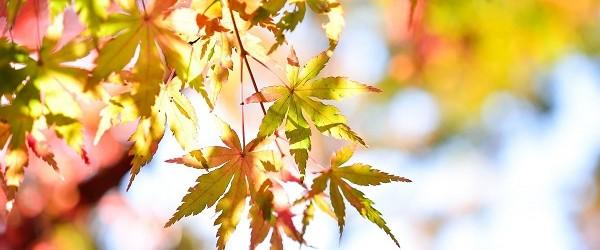 Времето през месец октомври – динамично с температури от -1 до 35 градуса