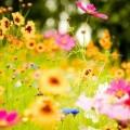 flower-meadow-20392-20902-hd-wallpapers_Fotor