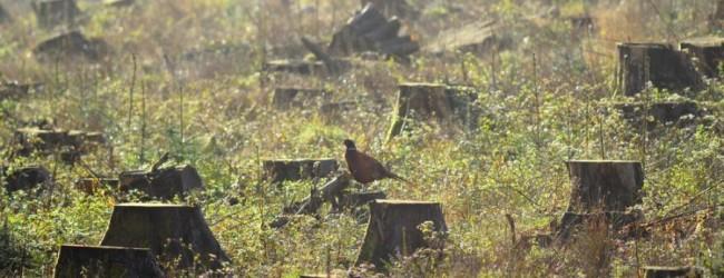 WWF пусна мобилно приложение за подаване на сигнали за незаконни дейности в гората